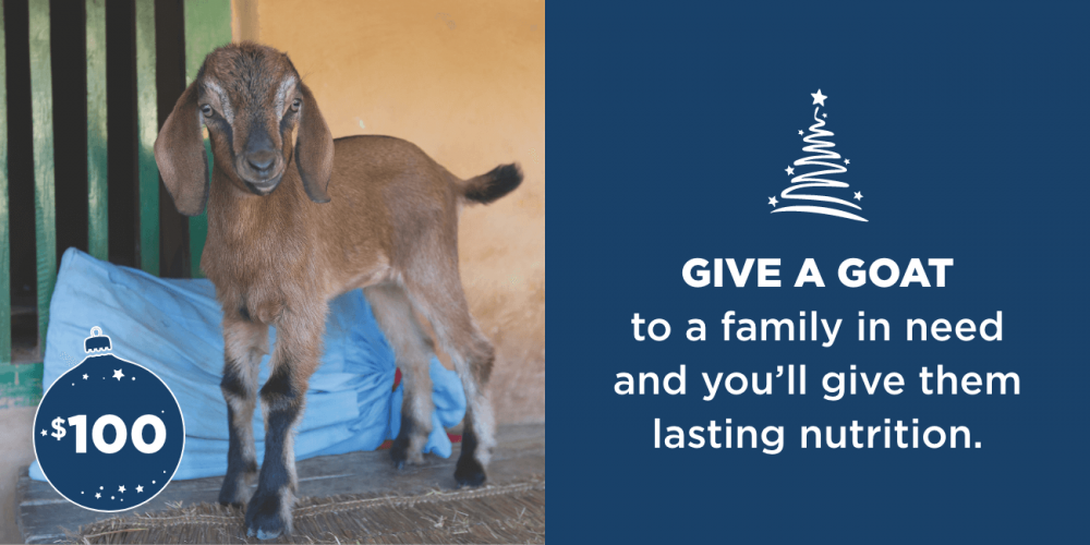 Give a goat to a family in need and you'll give them lasting nutrition.