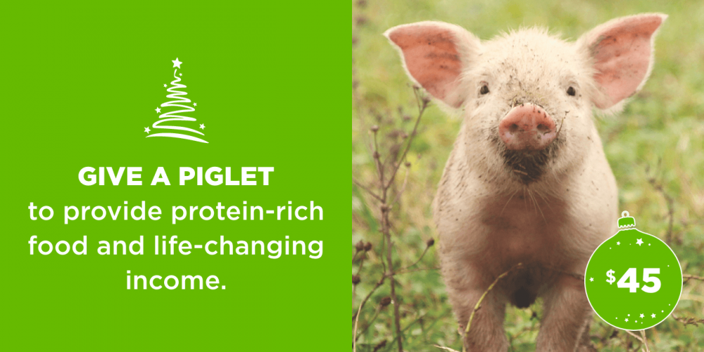 Give a piglet to provide protein-rich food and life-changing income.